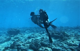During the dive to the Tiger's Zoo - a special tiger shark dive site in Fuvahmuah. PHOTO: FUVAHMULAH DIVE SCHOOL
