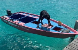 The missing dinghy pictured in this handout photo. The vessel was carrying three minors with a single crew member. PHOTO: MALDIVES POLICE SERVICE